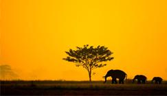 safari-serengeti